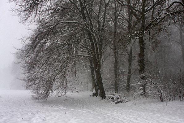 Sneeuw in Amelisweerd