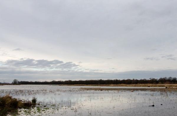 Foto van het natuurgebied Naardermeer