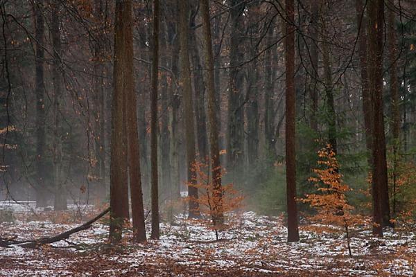 Foto van nevel in boswachterij de Vuursche