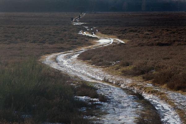 Foto van een pad op de Westerheide, Hilversum