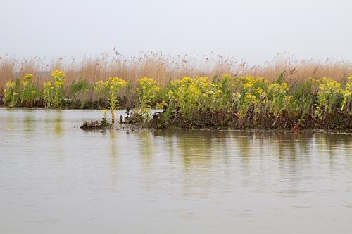 Foto van natuurgebied Harderbroek, Flevoland