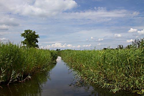 Foto van rietland, Nationaal Park Weerribben-Wieden