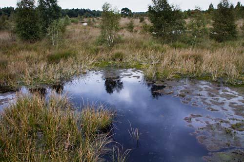 Foto van Nationaal Park de Groote Peel
