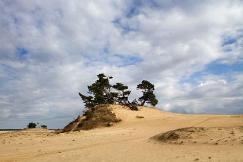 Foto van het Kootwijkerzand