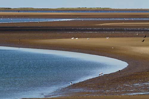 Foto van natuurgebied de Kwade Hoek op de kop van Goeree-Overflakkee