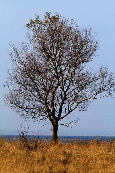 Foto van een boom aan het Volkerak