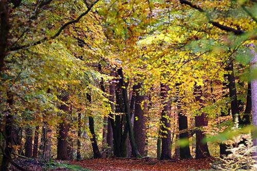 Foto van herfstkleuren in het bos