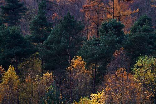 Foto van herfstkleuren op de Veluwe