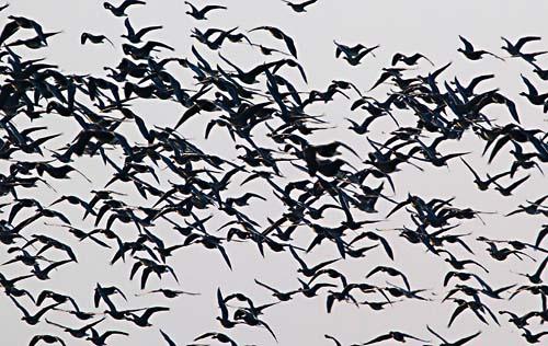 Foto van Kolganzen in de Ravenswaarden bij Gorssel