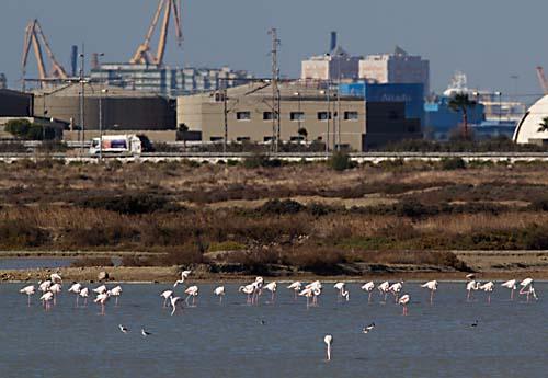 Foto van Flamingo's, Bahia de Cadiz, Andalusië, Spanje