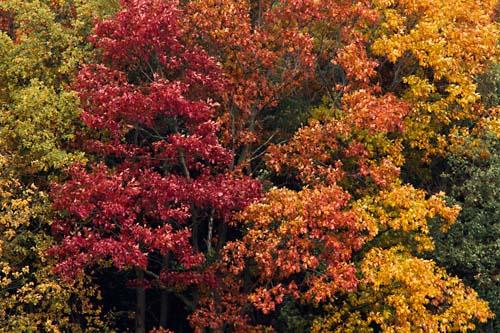 Foto van herfstkleuren in natuurgebied de Malpei, Valkenswaard, Noord-Brabant