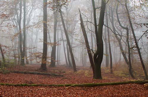 Foto van een mistig bos, Oosterbeek