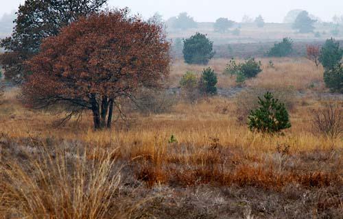 Foto van Nationaal Park de Sallandse Heuvelrug