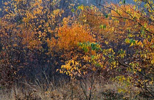 Foto van herfstkleuren in Nationaal Park de Sallandse Heuvelrug