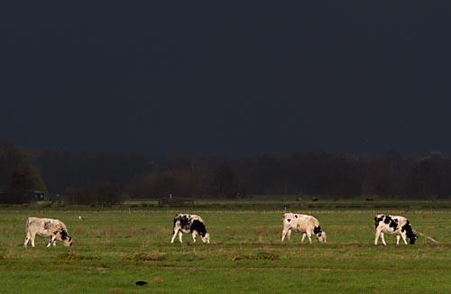 Foto van een donkere wolkenlucht in de Krimpenerwaard