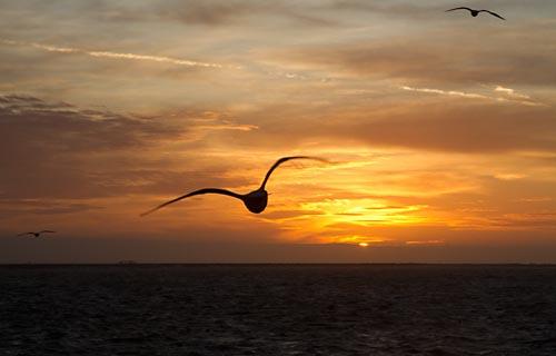Foto van een zonsondergang, IJmuiden