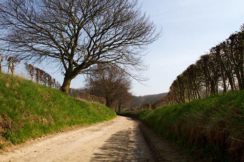 Foto van een holle weg, Rijckholt