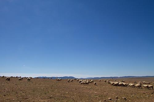 Foto van La Serena, Extremadura, Spanje