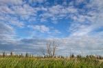 Foto van de Kollumerwaard, Nationaal Park Lauwersmeer