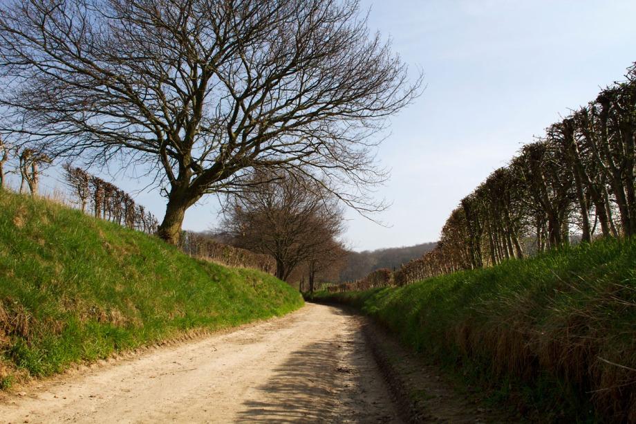 Foto van een weg, Rijckholt, Zuid-Limburg