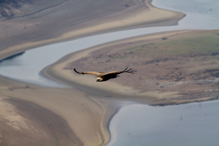 Foto van een Vale Gier, Monfragüe NP, Extremadura, Spanje