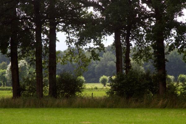 Foto van een landschap bij Woudenberg