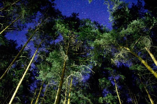 Foto van een bos bij nacht, Duitsland