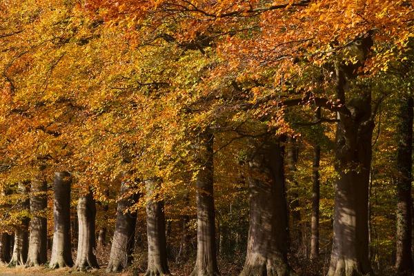 Foto van landgoed Oldenaller, Nijkerk