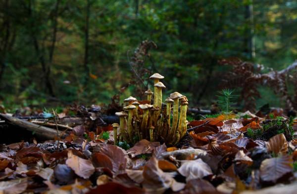 Foto van paddenstoelen, Speulderbos, Garderen