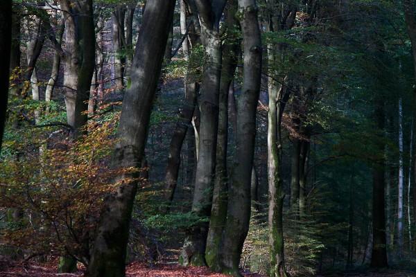 Foto van het Speulderbos, Garderen