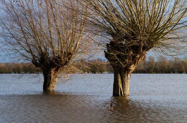 Foto van hoog water op de iJssel