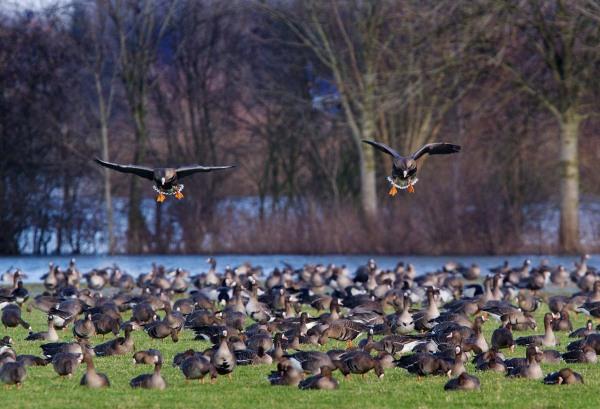 Foto van Kolganzen bij de iJssel