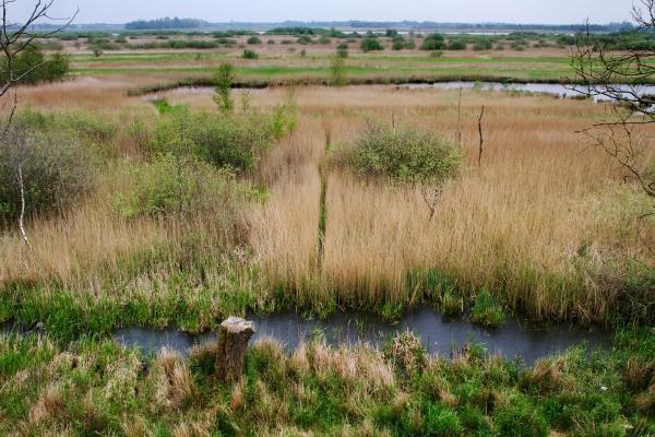 Foto van Nationaal Park Alde Feanen, Friesland