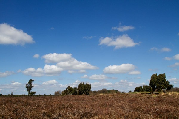 Foto van het Mantingerveld, Drenthe
