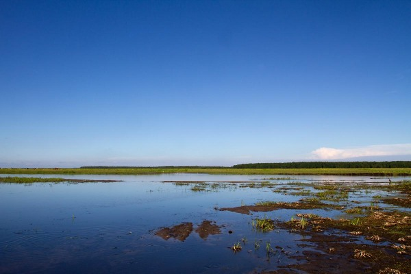 Foto van de de Biebrza rivier