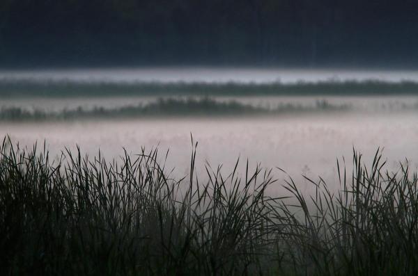 Foto van Nationaal Park Biebrza, Polen