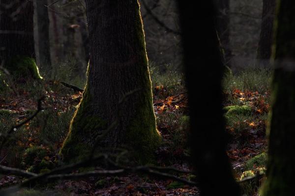 Foto van het Deelerwoud, Veluwe