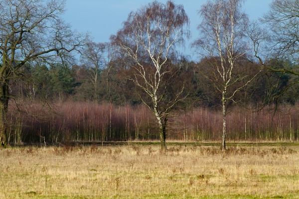 Foto van Reijerscamp, Wolfheze