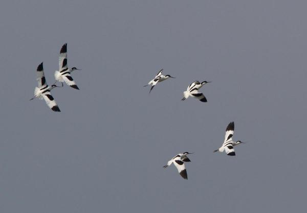 Foto van Kluten boven Ottersaat, Texel