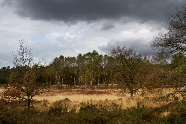 Foto van Nationaal Park Meinweg