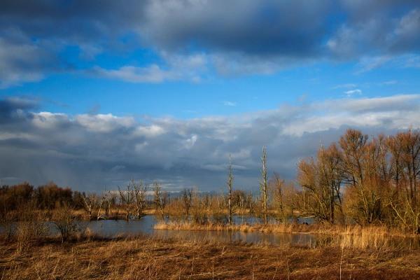 Foto van Nationaal Park de Biesbosch