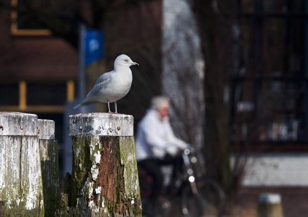 Foto van een Kleine Burgemeester, Utrecht