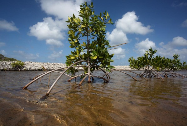 Photo of Mangroves,  Bonaire, Caribbean Netherlands