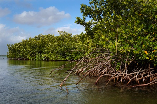 Photo of Mangroves, Lac Bay, Bonaire, Caribbean Netherlands