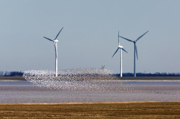 Foto van een zwerm waadvogels, Punt van Reide, Dollard