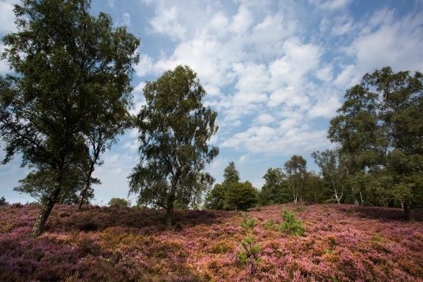 Foto van de Renderklippen, Veluwe