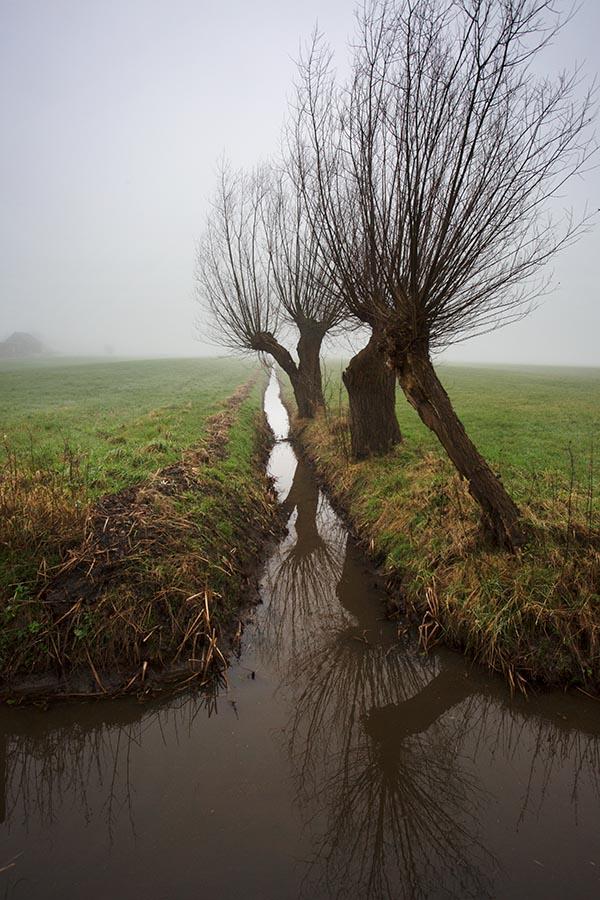 Foto van Knotwilgen, Langbroek