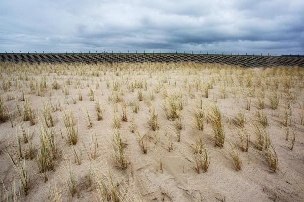 Foto van nieuwe duinen, Hondsbossche Zeewering