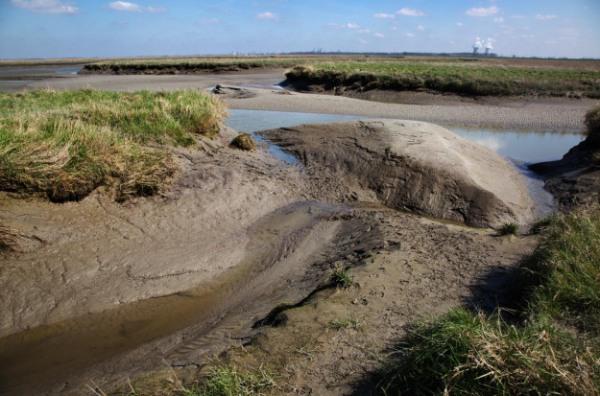 Photo of nature reserve Verdronken Land van Saeftinghe, the Netherlands