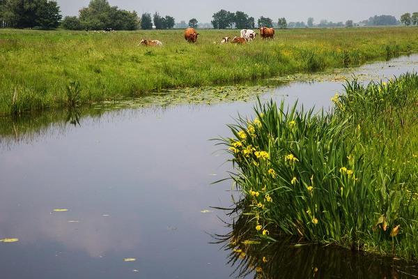 Foto van Polder Den Hoek, Krimpenerwaard
